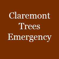Claremont Trees Emergency
