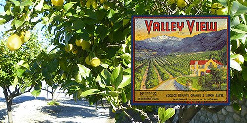 Lemon trees and Valley View label photo